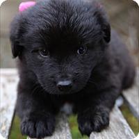 Adopt A Pet :: Jasmine - La Habra Heights, CA
