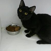 Adopt A Pet :: Norris - Miami Shores, FL