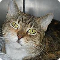 Adopt A Pet :: Stella - Miami, FL