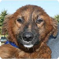 Adopt A Pet :: Shasta-PENDING! - kennebunkport, ME