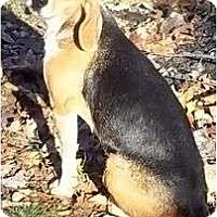 Adopt A Pet :: Wanda - Allentown, PA