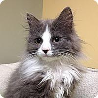 Adopt A Pet :: Ashe - Island Park, NY