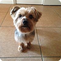 Adopt A Pet :: Stanley - North Port, FL