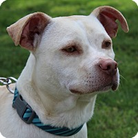 Adopt A Pet :: Andy - Mount Juliet, TN