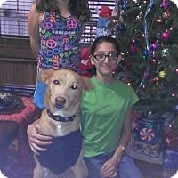 Adopt A Pet :: Bobby - Lebanon, ME