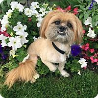 Adopt A Pet :: QUIZNO - Los Angeles, CA
