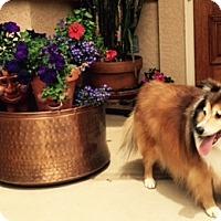 Adopt A Pet :: Dumpling - Pueblo West, CO