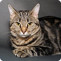Adopt A Pet :: Rita - Jersey City, NJ