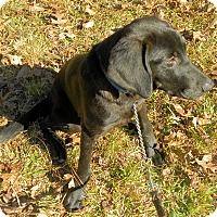Adopt A Pet :: Sasha - Atlanta, GA