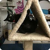Adopt A Pet :: MOON - Phoenix, AZ