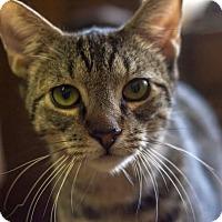 Adopt A Pet :: Frankie - Bronx, NY