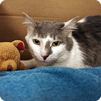 Adopt A Pet :: Dion 'Delightful' - Mt Vernon, NY