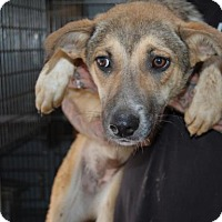 Adopt A Pet :: Frankie - Brooklyn, NY