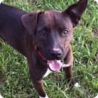 Adopt A Pet :: Max - Warrington, PA