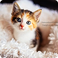 Adopt A Pet :: Katana - Xenia, OH