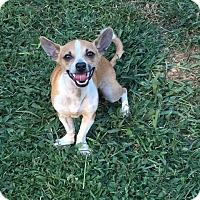 Adopt A Pet :: Nano - Ardmore, OK