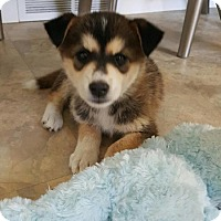 Adopt A Pet :: TIMBER - Winnipeg, MB
