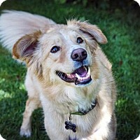Adopt A Pet :: Sundance - Boulder, CO