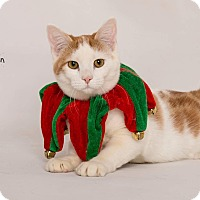 Adopt A Pet :: Harley Quinn - Riverside, CA
