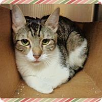 Adopt A Pet :: MIRIA - Marietta, GA