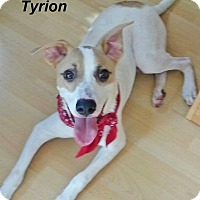 Adopt A Pet :: Tyrion meet me 12/16 - Manchester, CT