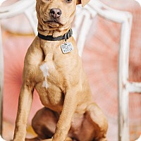 Adopt A Pet :: Holly - Portland, OR