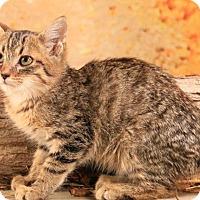 Adopt A Pet :: Yogurt - shy - Madison, TN