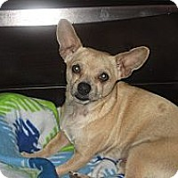 Adopt A Pet :: Gordo - Chicagoland area, IL