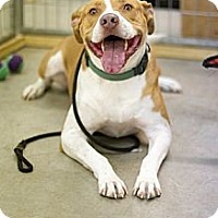 Adopt A Pet :: Preston - Houston, TX