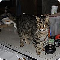 Adopt A Pet :: Jag - N. Berwick, ME