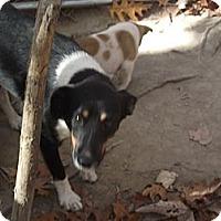 Adopt A Pet :: Mel - Spring Valley, NY
