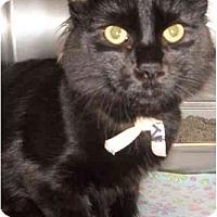 Adopt A Pet :: Russ - Montreal, QC