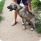 Adopt A Pet :: Zara