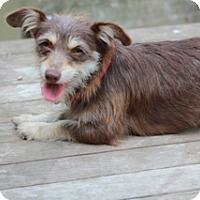 Adopt A Pet :: Selena - Norwalk, CT