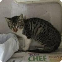 Adopt A Pet :: Rufus - Slidell, LA