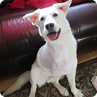 Adopt A Pet :: RJ - Adopted! - Ascutney, VT