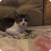 Adopt A Pet :: Dora - Delray Beach, FL