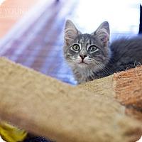 Adopt A Pet :: Smokey - Fredericksburg, VA