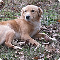 Adopt A Pet :: Clyde - Bedminster, NJ