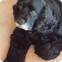 Adopt A Pet :: Magnum - Huntsville, AL