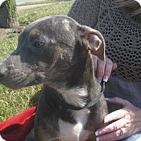 Adopt A Pet :: Trick - Portland, ME