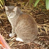 Adopt A Pet :: Florabelle - Bonita Springs, FL