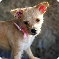 Adopt A Pet :: Patsy - Dalton, GA