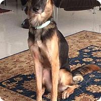 Adopt A Pet :: Danika - Hillside, IL
