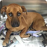 Terrier (Unknown Type, Medium) Mix Dog for adoption in Miami, Florida - Jay