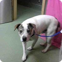Adopt A Pet :: PAUL-URGENT 10/25 @ DEVORE - San Bernardino, CA