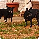 Adopt A Pet :: Cala & Casey