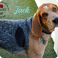 Coonhound Mix Dog for adoption in Youngwood, Pennsylvania - Jack
