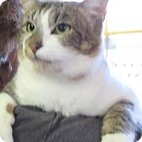 Adopt A Pet :: Benny - Reeds Spring, MO