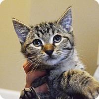Adopt A Pet :: Pontus - Lincoln, NE